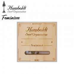 Amherst Sour Diesel