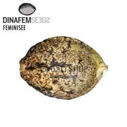 Dinachem