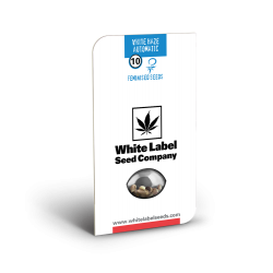 White Haze Auto - White...