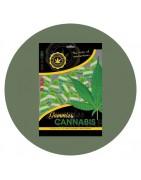 Bonbons et sucettes goûts cannabis - Large choix de gourmandises